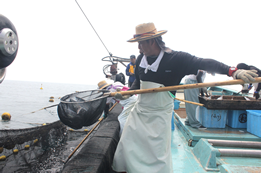定置網漁は網で傷められません