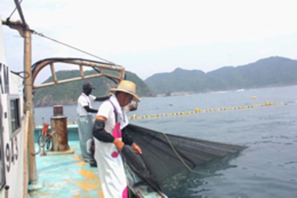 本日は網替え作業のため漁は休みです。
