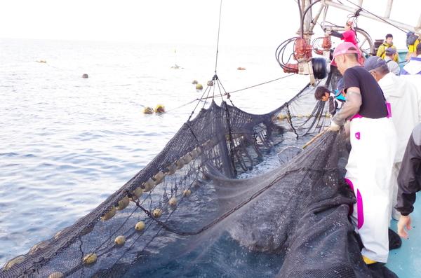 定置網漁、底引き網漁が再開します。