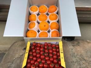 驚きの甘さのミニトマトと人気No.1の不知火(デコポン)の詰合せ 送料込