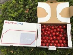 驚きの甘さ❣ 天草ミニトマト2kgセット (1kg箱 x 2) 送料・税込価格です