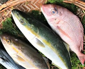 天草活き活き旬魚セットP(税込)(送料無料!) 前処理可(ウロコ、エラ、内臓など除去)