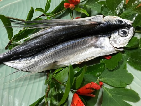とび魚 ホクホク鮮魚一夜干し(200~300g)(税込)(送料無料!) 冷凍