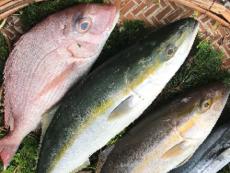 天草活き活き旬魚セットP(税、送料込) 前処理可(鱗、内臓除去)