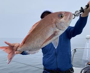 天然真鯛 1kg当たりの価格です