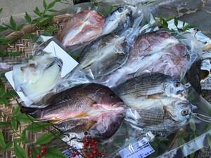 天草ホクホク鮮魚一夜干し詰合せ (税、送料込)