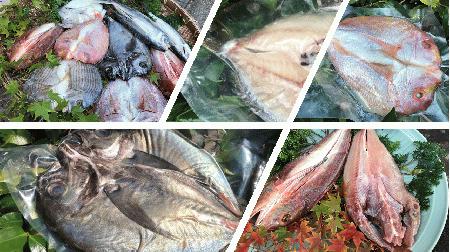 天草ホクホク鮮魚一夜干し詰合せ (税込)(送料無料!) 冷凍