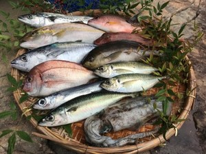 活き活き旬魚セットM  送料、税込価格 前処理可(鱗、内蔵除去)