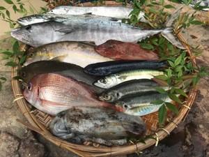 活き活き旬魚L 送料、税込価格 前処理可(鱗、内蔵除去)