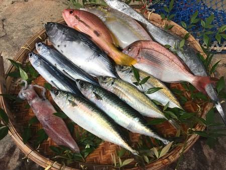 活き活き旬魚セットS(下処理可)送料税込み