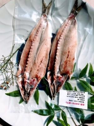 カマスのホクホク鮮魚一夜干し(1~2匹/パック) (税込) 送料別