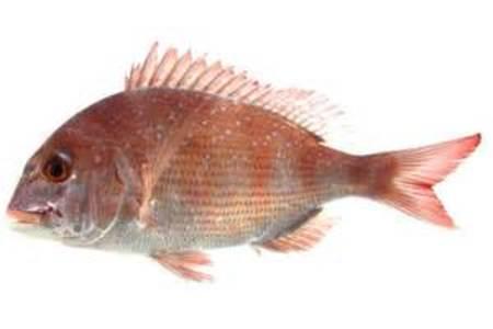 真鯛のホクホク鮮魚一夜干し 1パックの価格です(送料+消費税は別途)
